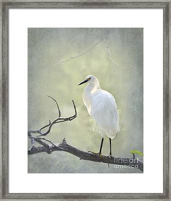Snowy Egret Framed Print by Betty LaRue