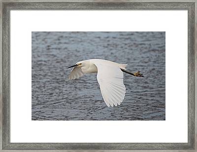 Snowy Egret Over The Mud Flats Framed Print by Loree Johnson