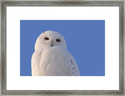 Snowy Owl - The Look Framed Print by Jestephotography Ltd