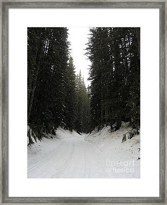 Snowy Pines Framed Print by Silvie Kendall