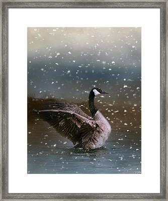 Snowy Swim Framed Print by Jai Johnson
