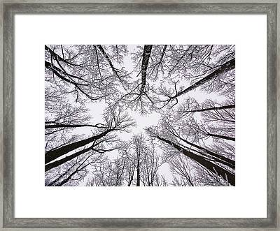 Snowy Treetops Framed Print by June Marie Sobrito
