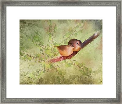 Snuggled Framed Print by Colleen Taylor