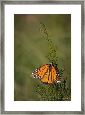 So Far To Go Monarch Butterfly Framed Print by Reid Callaway