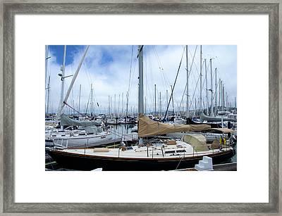 So Many Sailboats Framed Print by Laura DAddona