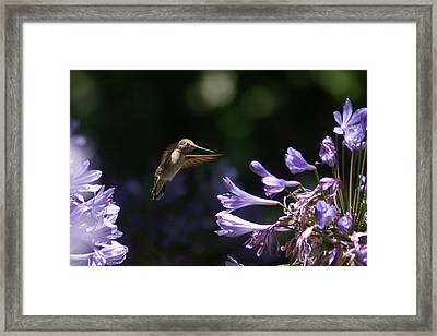 So Many To Choose From Framed Print by David Armentrout