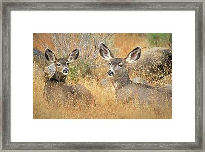 So Much For Your Secret Place... Framed Print by Donna Kennedy