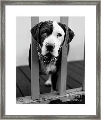 So Sad Framed Print by Peter Piatt