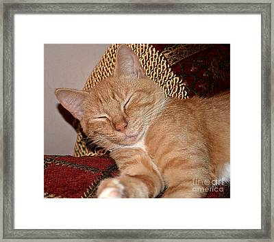 So Sleepy  Framed Print by JW Hanley