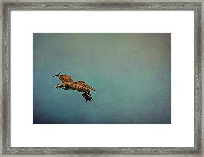 Soaring Pelican In Late Afternoon Light Framed Print by Carla Parris
