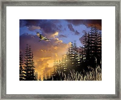 Soaring Raptor Framed Print by Paul Sachtleben