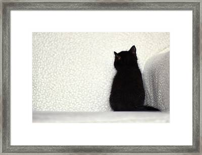 Sitting Kitty Framed Print by Amy Tyler
