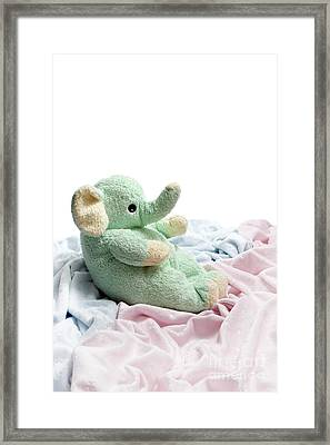 Soft And Cuddly Framed Print by Jeannie Burleson