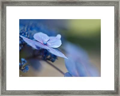 Soft Blue Moment Framed Print by Lisa Knechtel
