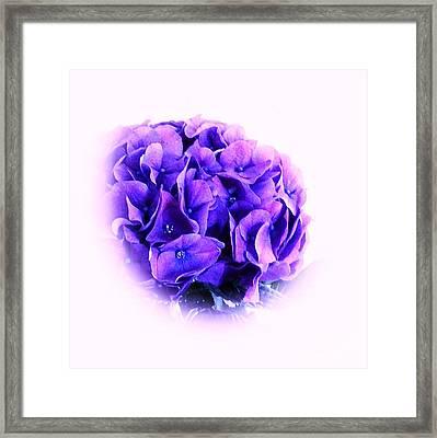 Soft Hydrangia Framed Print by Marsha Heiken