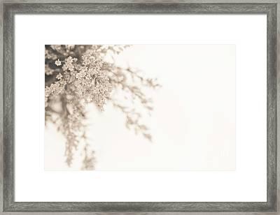 Soft Solidago Framed Print by Anne Gilbert