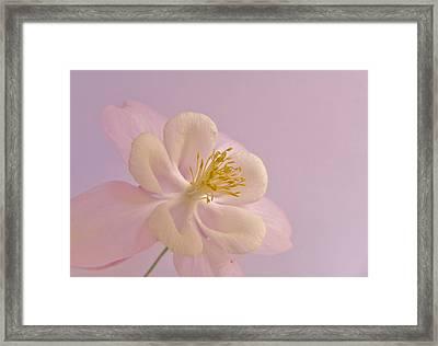 Softy Beautiful Framed Print by Barbara St Jean