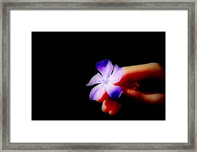 Solitaire Framed Print by Mike Hill