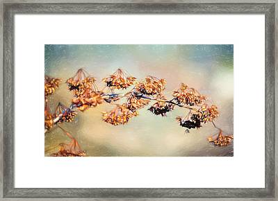Solitary Branch Framed Print by Black Brook Photography