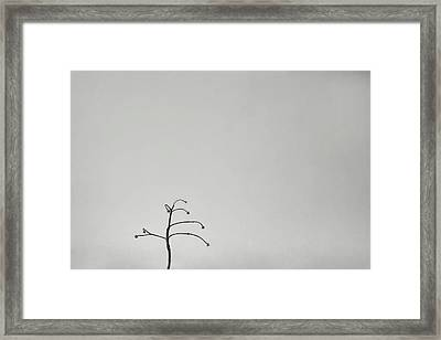 Solitary Framed Print by Scott Norris