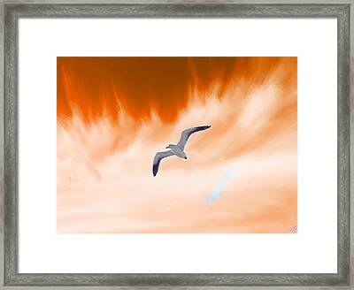 Solitary Seagull At Sunset Framed Print by Bruce Nutting