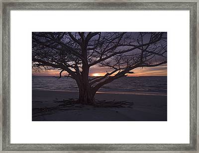 Solitude  Framed Print by Betsy C Knapp