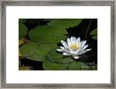 Solo Framed Print by Clayton Bruster