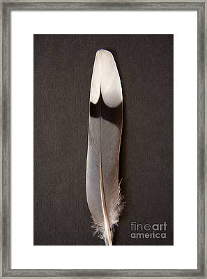 Solo Framed Print by Julia Hiebaum