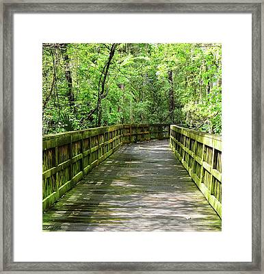 Some Like It Green Framed Print by Kathy Kelly