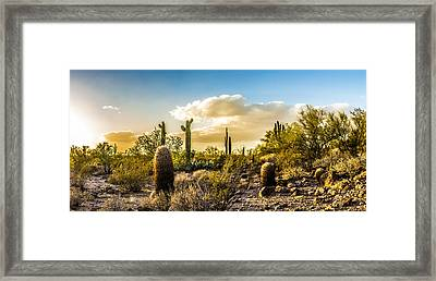 Sonoran Desert Sunset Panoramic Framed Print by Chuck Brown