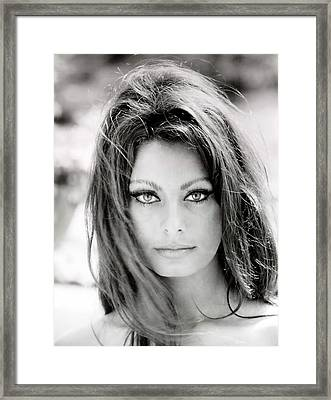 Sophia Loren Framed Print by Nomad Art