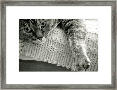 Sophie Framed Print by Erica Laucella