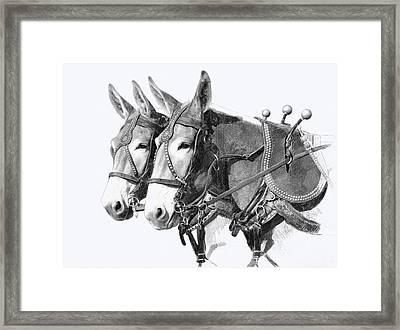 Sorrel Mule Team Framed Print by Bethany Caskey