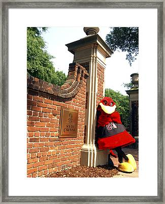 South Carolina Cocky On Campus Framed Print by University of South Carolina Photography