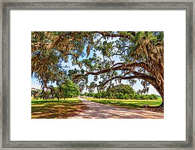 Southern Serenity Framed Print by Steve Harrington
