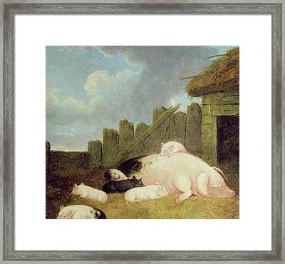 Sow With Piglets In The Sty  Framed Print by John Frederick Herring Snr