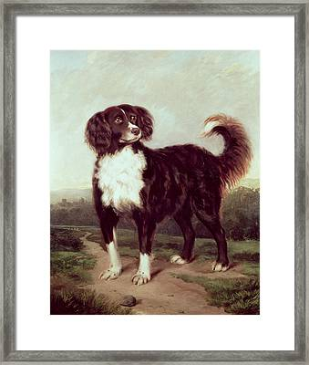Spaniel Framed Print by JW Morris