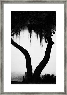 Spanish Moss In Silhouette Framed Print by Shelby  Young