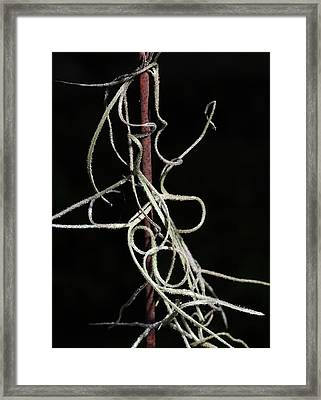 Spanish Moss On Wire Framed Print by Richard Rizzo