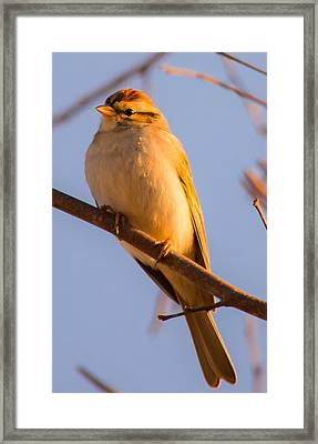 Sparrow At Sunset Framed Print by Parker Cunningham