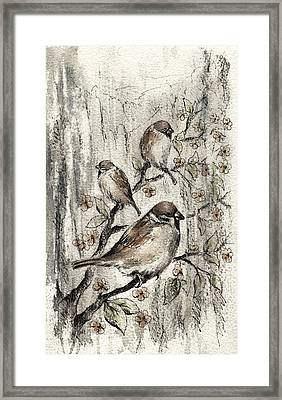 Sparrow Framed Print by Rachel Christine Nowicki
