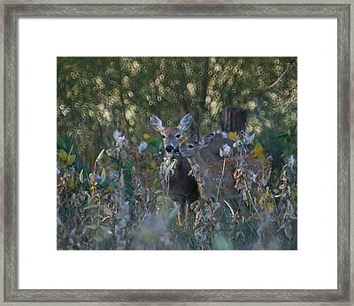 Special Moment Framed Print by Ernie Echols