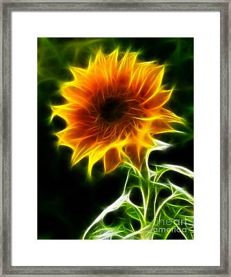 Spectacular Sunflower Framed Print by Pamela Johnson