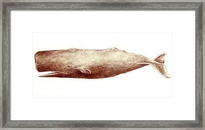 Sperm Whale Framed Print by Michael Vigliotti