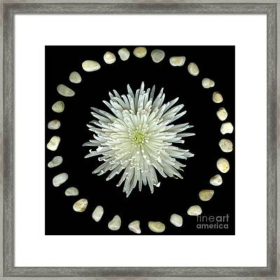 Spider And Stones Framed Print by Christian Slanec