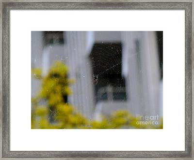 Spider Framed Print by As the Dinosaur Flies Photography