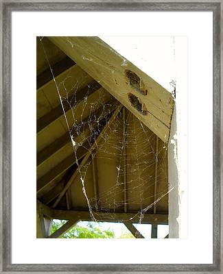 Spider Web Framed Print by Theresa Adams