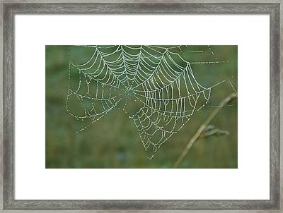 Spider Web With Dew Drops Framed Print by Douglas Barnett
