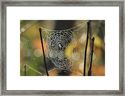 Spider's Creation Framed Print by Karol Livote