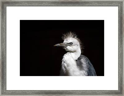 Spiked  Framed Print by Mike  Dawson
